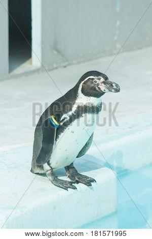 penguin in water outdoor landscape