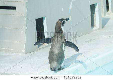 penguin in water outdoor landscape . .