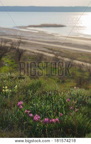 Wild purple irises on the lake bank.