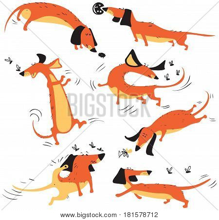 Funny dachshunds playing with insects isolated on white background. Happy smart vector dogs collection.