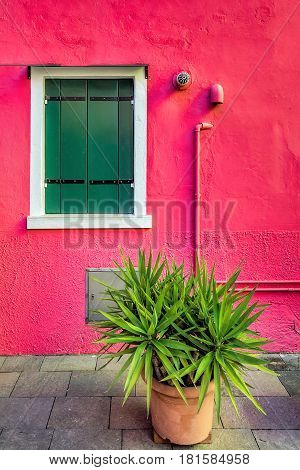 Decorated facade of the house with green plant. Colorful houses  windows on red wall of houses on the famous island Burano, Venice, Italy
