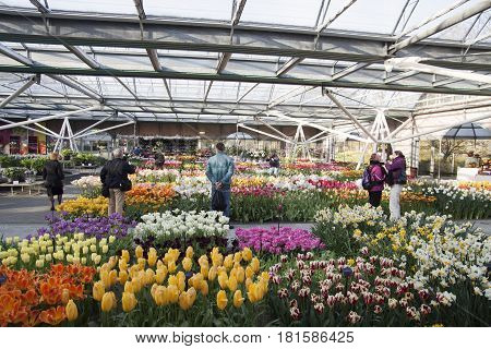 LISSE, THE NETHERLANDS - APRIL 21, 2015  Inside the Willem-Alexander Pavillion. Keukenhof is the world's largest flower garden