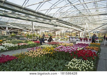 LISSE, THE NETHERLANDS - APRIL 21, 2015 Inside the Willem-Alexander Pavillion. Keukenhof is the world's largest  colorful   indoor flower hall.