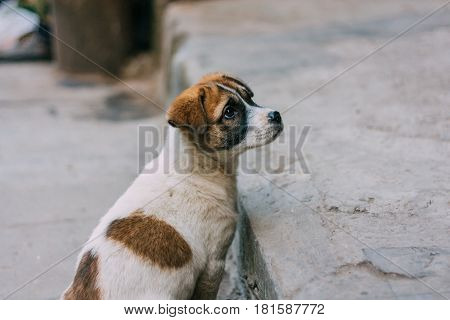 Sad white and brown stray dog standing on a road looking back