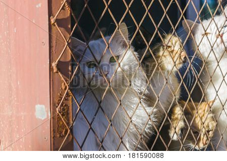 three cats trap and is stuck in a steel wire nettingcagehoping for freedom with sad feeling