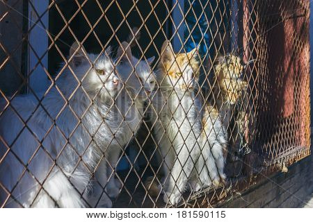cats trap and is stuck in a steel wire nettingcagehoping for freedom with sad feeling