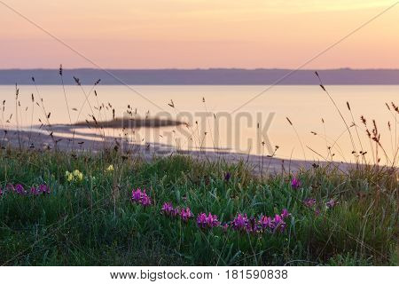 The estuary coast with wild irises at sunset.