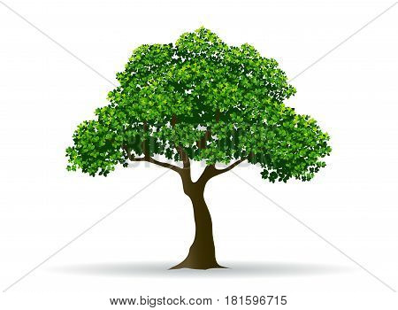 tree and leaf tree branch realistic tree vector illustration