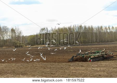 The Tractor Plows The Field In The Spring