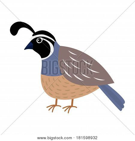 Quail bird. Cute cartoon character. Flat design. Isolated. White background Vector illustration