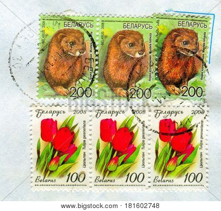 GOMEL, BELARUS, APRIL 13, 2017. Stamp printed in Belarus shows image of  The Mustela lutreola and Tulipa gesnenana, circa 2008.