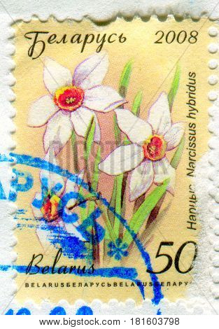 GOMEL, BELARUS, APRIL 11, 2017. Stamp printed in Belarus shows image of  The Narcissus hybridus, circa 2008.