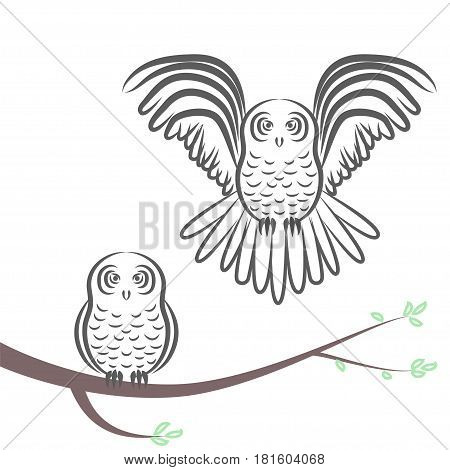 Flying and sitting on a branch owl silhouette. Stock vector illustration of a bird couple with one in flight with stretched wings and the other in rest.