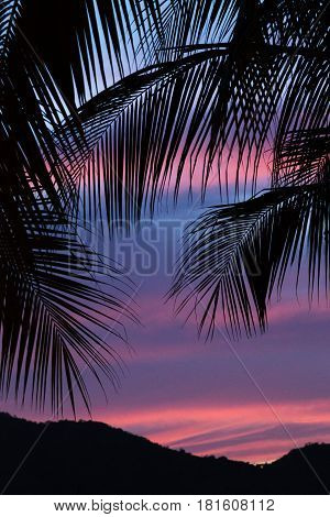 Silhouette Of Palm Leaves