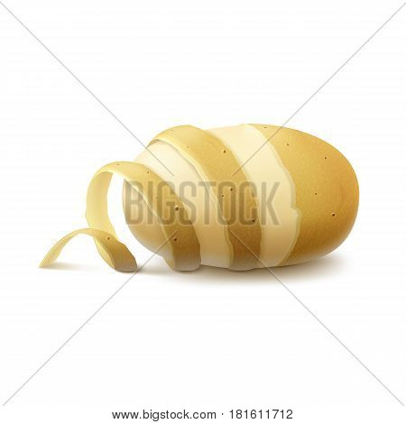 Vector New Yellow Raw Half Peeled Potato with twisted peel  Close up Isolated on White Background