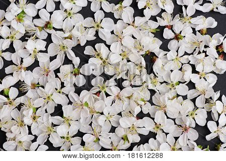 Cherry, Apricot Flowers As Natural Floral Background On Black Color
