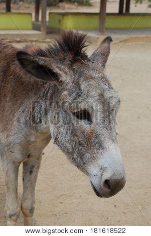 Wild donkey sanctuary on a Carribean Island off the coast of Venezuela.