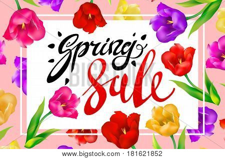 Spring Sale Banner, Colotful Tulips Flowers Pink Background With Lettering. Template For Greeting Po