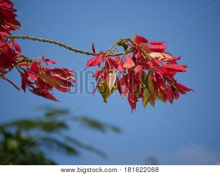 Red leaves Trees or plants with red leaves make up for great decorative purposes