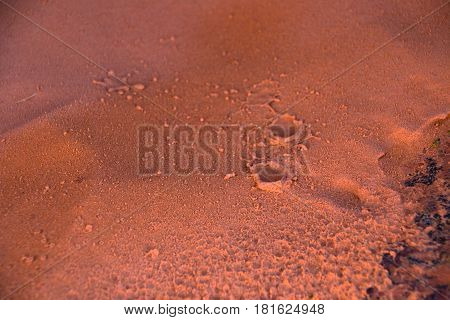 Raindrops In The Red Sand In Nevada