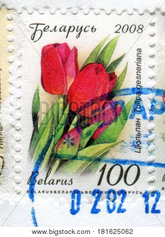 GOMEL, BELARUS, APRIL 11, 2017. Stamp printed in Belarus shows image of  The Tulipa gesneriana, circa 2008.