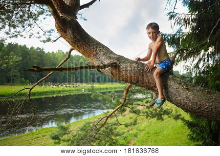 Little boy in shorts sits on tree branch and looks at camera near river at summer