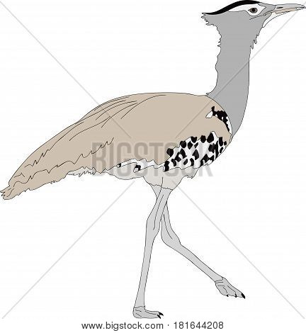 Portrait of a wild kori bustard - colored hand drawn vector Illustration isolated on white background