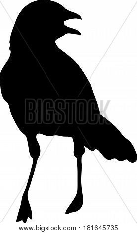 Silhouette of a crimson breasted shrike - digitally hand drawn vector silhouette, black isolated on white background