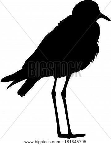 Silhouette of a Blacksmith Lapwing on the ground - digitally hand drawn vector silhouette, black isolated on white background