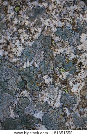 Rock, lichen and moss texture and background. Mossy stone background. Abstract texture and background for designers. Mossy stone texture. Closeup view of lichen and moss.