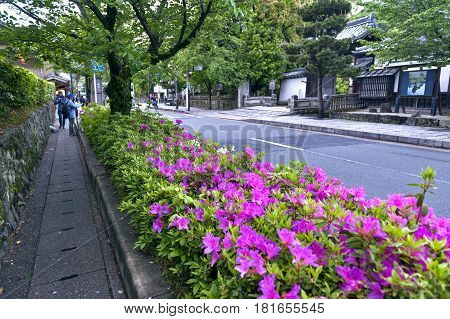 Kyoto Japan - March 2016: Pink flowers of George Taber azalea during blossom season in Arashiyama
