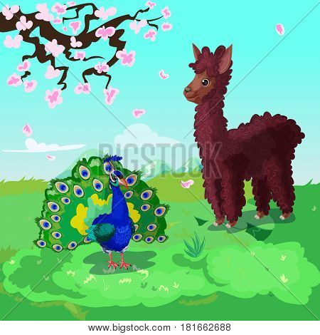 Colorful cartoon asian animals background with lama and peacock standing on grass under branch of sakura vector illustration