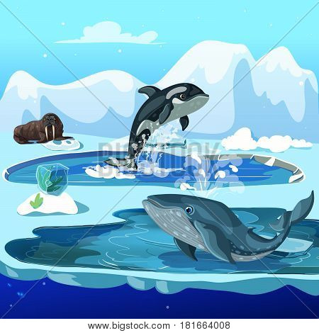 Cartoon arctic fauna template with walrus orca and whale on winter ice snowy landscape vector illustration
