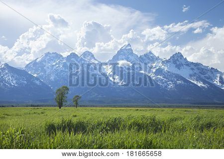 Grand Teton mountain range above grassy fields in Wyoming USA