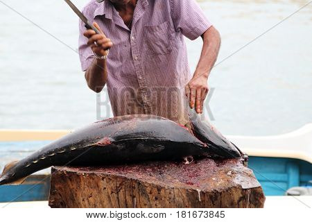 Fish monger cutting a blue-fin tuna at Lellama Fish Market Negombo Sri Lanka