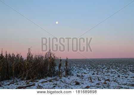 The moon shines on the cornfield on in February