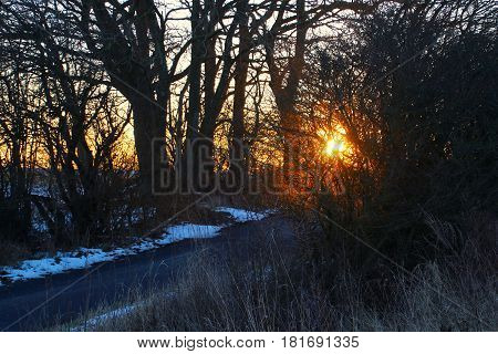 The sun colors shrubbery red in February