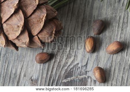 Cedar cone nuts and needles close up shot