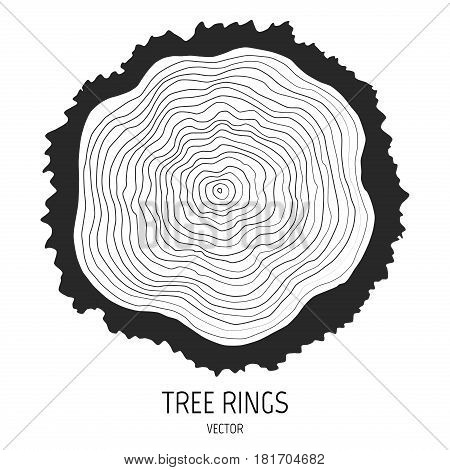Vector annual tree rings. Cut log firewood cross section of a tree. Tree trunk rings. EPS10 wood texture.