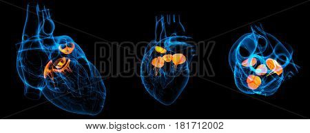 3D Render Illustration Of The  Heart Valve