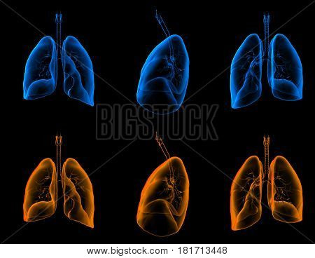3D rendering medical illustration of the lungs