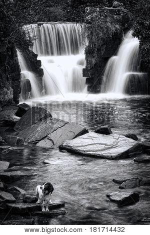 Penllergare Waterfall near Swansea in Wales, UK black & white image