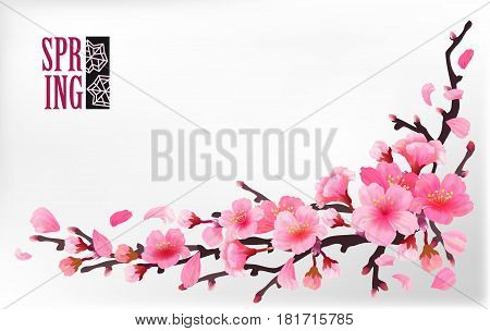Branch of sakura or cherry blossom branch with blooming and leaves on light background. Cherry blossom japan spring design. Vector illustration stock vector.