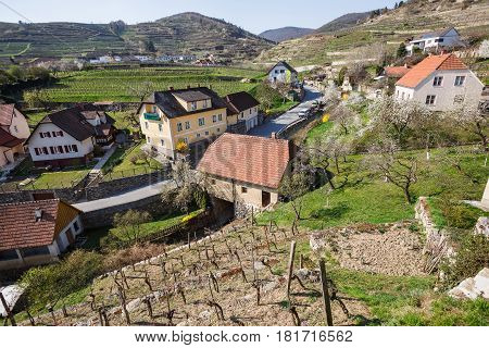 Village of Weissenkirchen-in-der-Wachau, surrounded with flowering gardens and terraced vineyards. Wachau-valley, district of Krems-Land, Lower Austria.