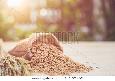 Thai Yellow Paddy Rice In Small Sack On Wooden Table With Sunlight Blur And Bokeh Background In Morn