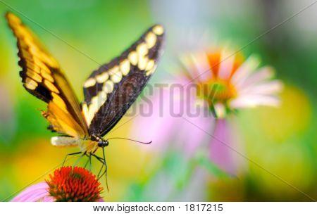 Butterflysummer20074