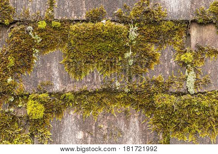 Wooden roof shingles that are covered in moss.