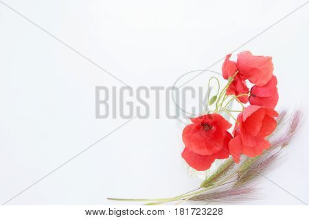 White Background With Empty Place For Inscription With Red Poppies In A Transparent Glass On A White