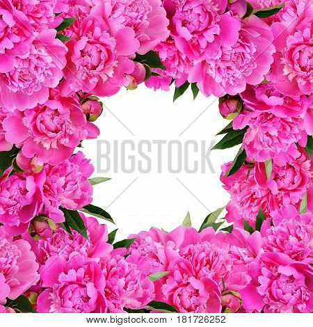 Pink peony flowers frame isoated on white background