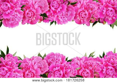 Pink peony flowers borders isoated on white background